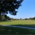 フラワーパーク江南 (3)芝生広場