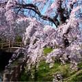 桜ネックレス (11)