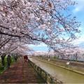 桜ネックレス (2)