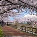 桜ネックレス (3)