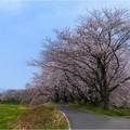 境川堤(柳津町) (3)