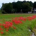 員弁町下笠田 (1)八幡神社