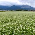 大安町蕎麦畑 (2)