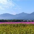 菰野町小島 (2)