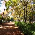 名城公園 (23)