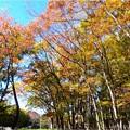 名城公園 (24)