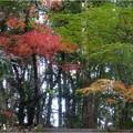 定光寺公園 (10)