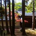 妙興寺 (4)