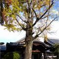 妙興寺 (23)
