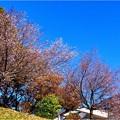 庄内緑地 (1)