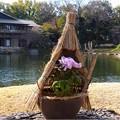徳川園 (1)八千代椿