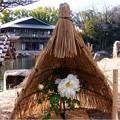 徳川園 (3)紀子の舞