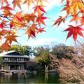 徳川園 (4)