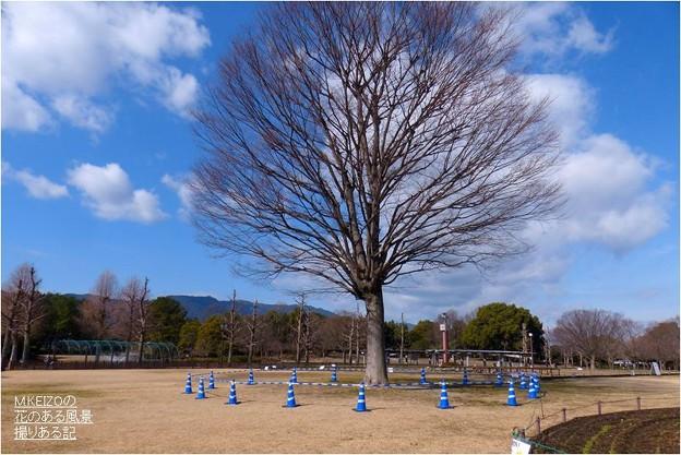 木曽三川公園センター (26)