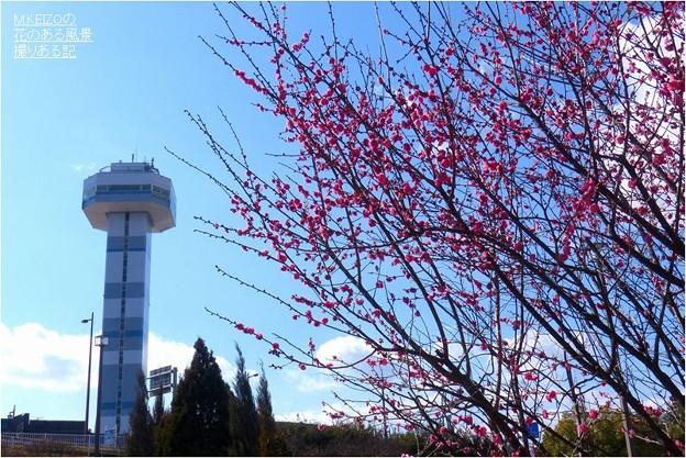 木曽三川公園センター (27)