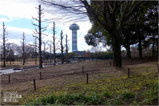 木曽三川公園センター (32)