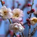 Photos: 都錦