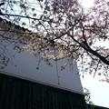 Photos: 侘春