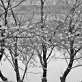 Photos: 春の水辺