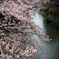 Photos: 雨の近江水郷