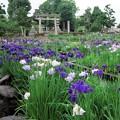写真: 萬葉公園高松分園