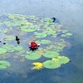 写真: 雨の蓮池
