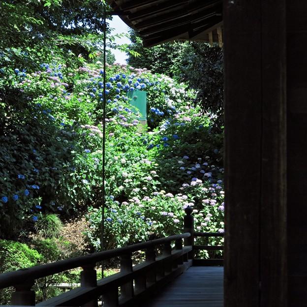 写真: 初夏