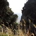 Photos: そうだ江ノ島に行こう