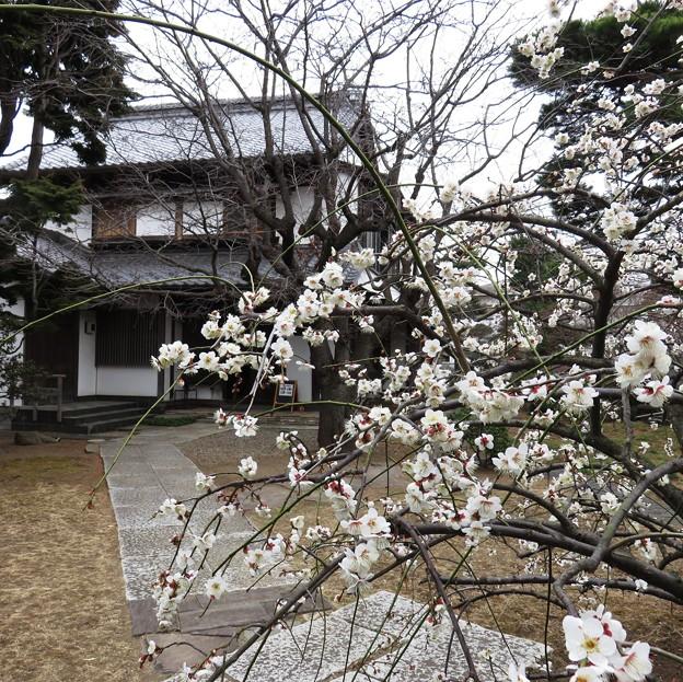 Photos: 旧三觜八郎右衛門家住宅