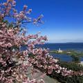 Photos: 河津桜と弘法大師上陸像