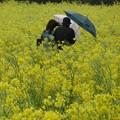 写真: 春に三日の晴れなし