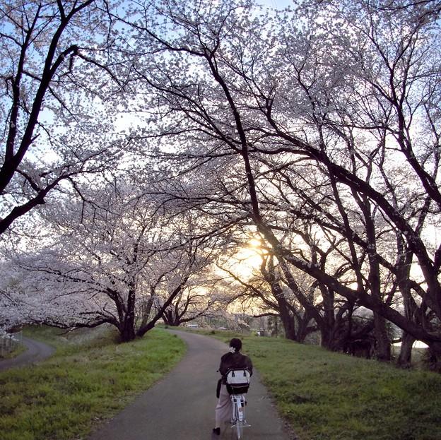 春の夕暮れ
