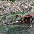 写真: 花筏の中を