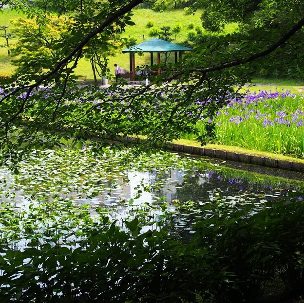 写真: 初夏の公園