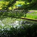初夏の公園