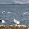 写真: 水鳥の楽園