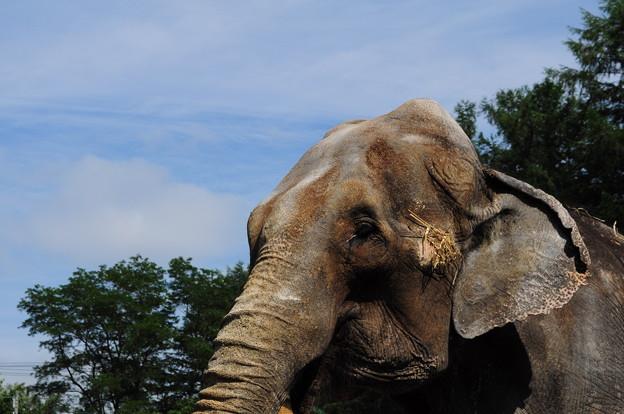 帯広動物園4