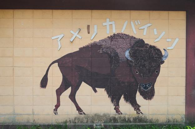 帯広動物園6