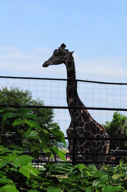 帯広動物園10
