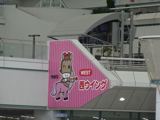 写真: 阪神競馬場4