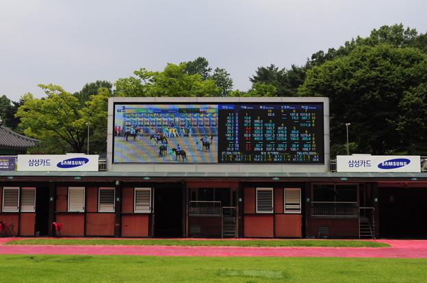 韓国競馬公園 Lets Run Park 6