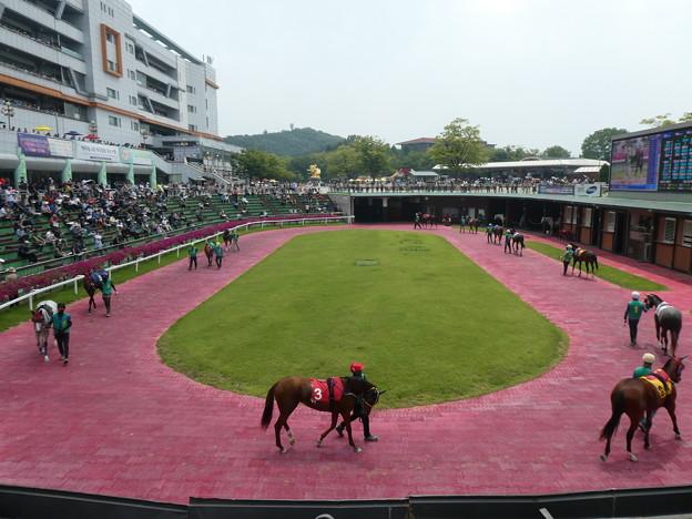 韓国競馬公園 Lets Run Park 29