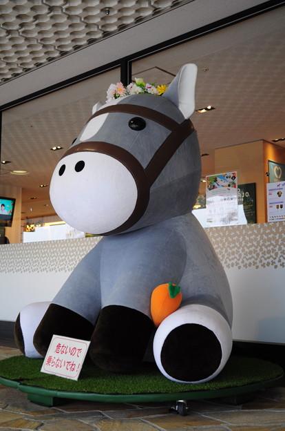 京都競馬場27