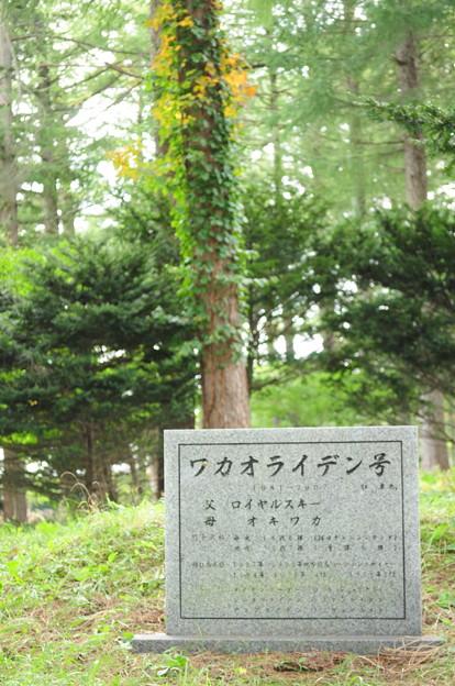 ワカオライデンのお墓