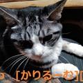 Photos: 2018/12/01猫すず(スズ)の写真1812011919