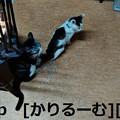 Photos: 2018/12/01猫スズと猫ハナの写真1812011944