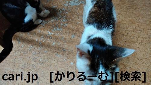 Photos: 2018/12/01猫スズとハナの写真1812011944
