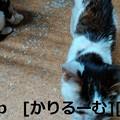 写真: 2018/12/01猫スズとハナの写真1812011944
