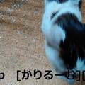 写真: 2018/12/01猫ハナ(はな)の写真1812011944