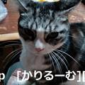 写真: 2018/12/05 猫スズ(すず)写真 KIMG0241